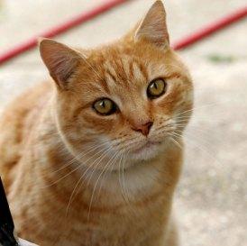 cat-s-face-1553769